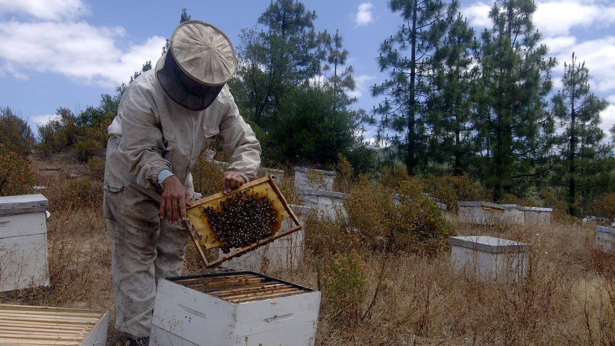 En Andalucía hay 4.500 explotaciones apícolas.