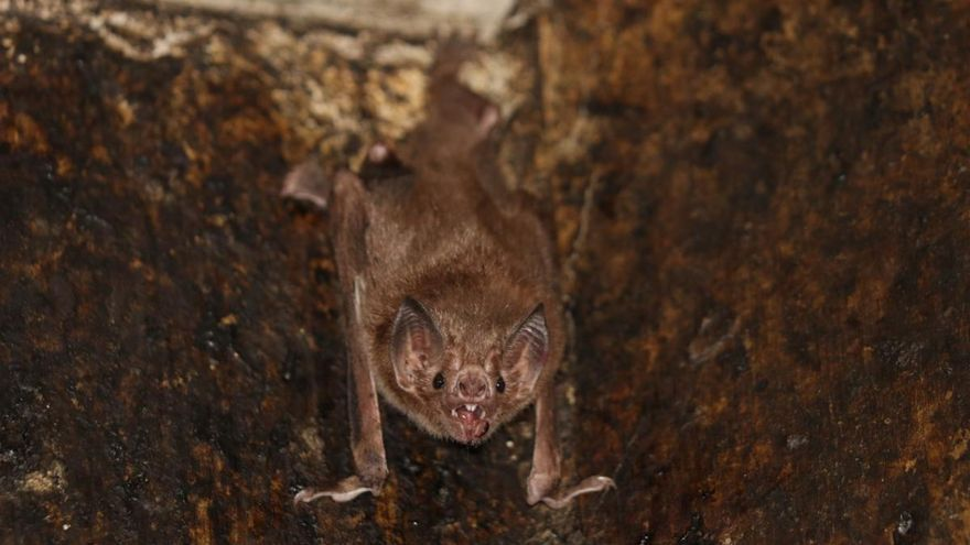EL sueño del murciélago