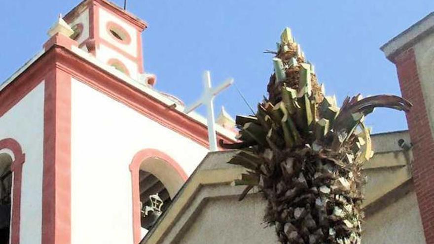 El picudo rojo obliga a talar las palmeras de la plaza de la iglesia