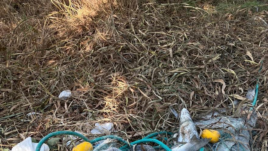 Encuentran kilos de pescado abandonados en La Manga