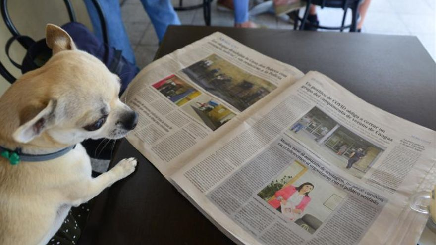 Un perro que lee el FARO DE VIGO de papel.