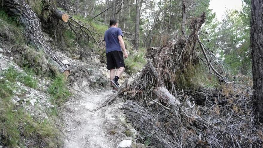 Mariola y la Carrasqueta acumulan miles de pinos por los suelos en la época de más riesgo de incendios