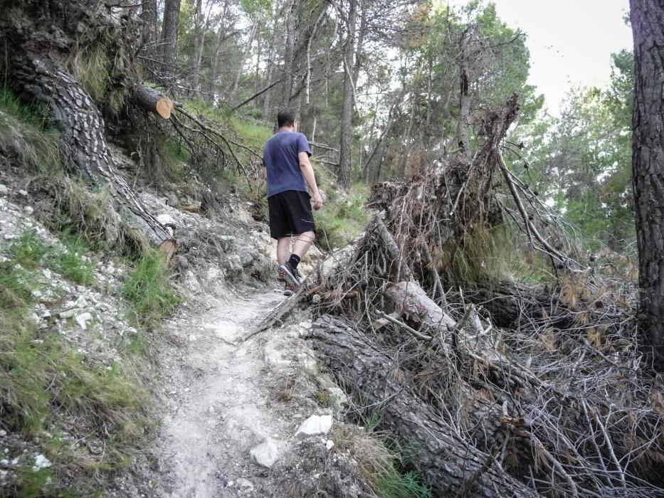 La falta de personal y la envergadura de los daños causados por la borrasca Gloria han impedido retirar los árboles en el parque natural, más allá de en caminos y pistas.
