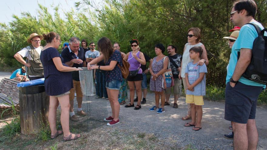 Borriana prepara un voluntariado para recuperar tortugas