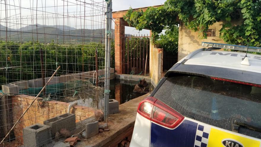 Policías de la Vall salvan a un perro a punto de morir ahogado en una balsa