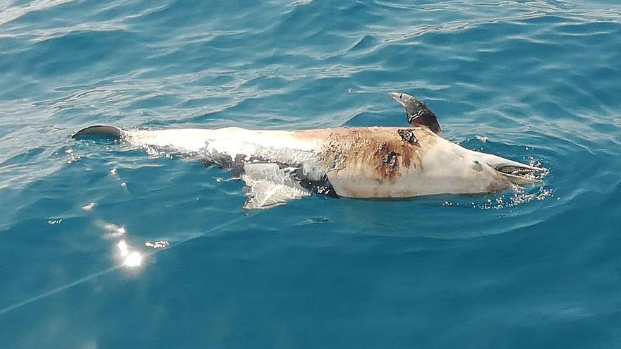 Aparece un cetáceo muerto a la deriva en Papagayo