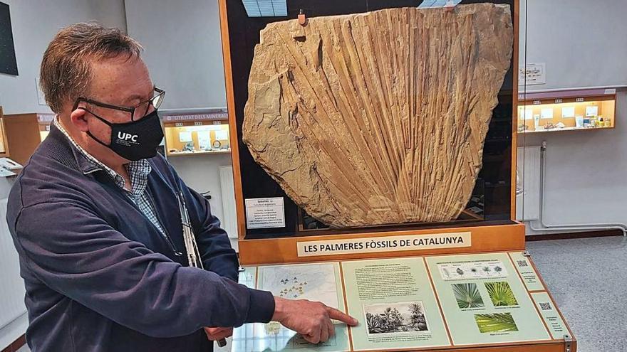 El Museu de Geologia estrena la mostra «Fòssils i canvi climàtic»