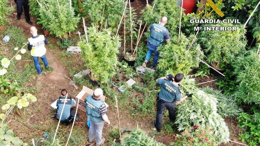 Detenido un hombre por cultivar 181 plantas de marihuana en una finca privada de Onda