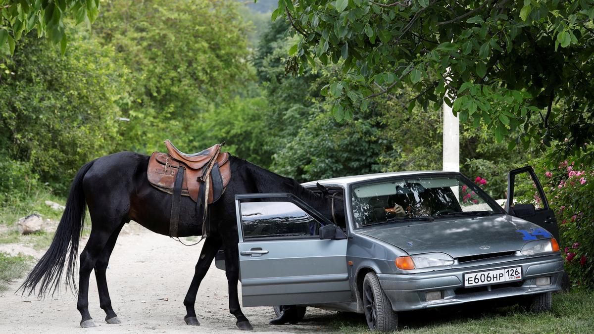 Un caballo intenta meterse en un coche en Rusia.