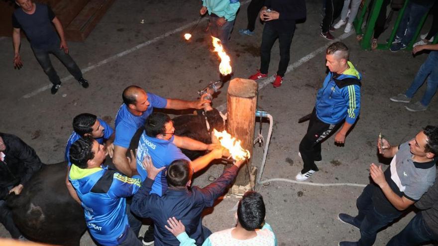 El 'bou embolat' gana por seis votos en Senija