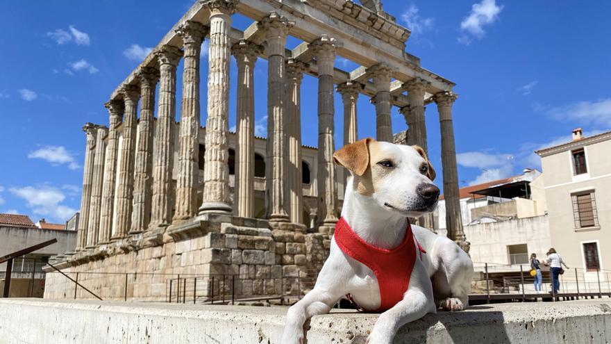 Pipper, el perro 'influencer', visita la ciudad