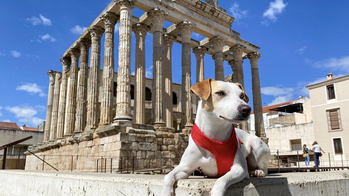 Pipper en el Templo de Diana.