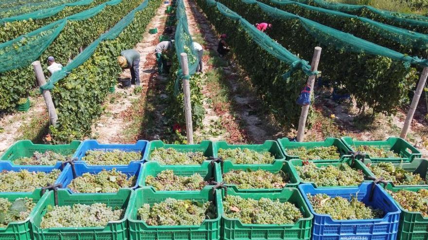 La campaña del vino arranca con el lastre de la caída de ventas por la pandemia