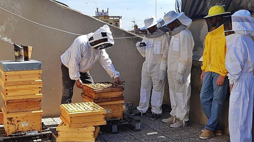 El mundo de la apicultura llega  a 24 colegios de infantil y primaria