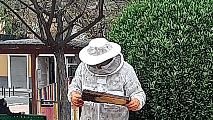 Tres mil abejas en un parque de Aspe
