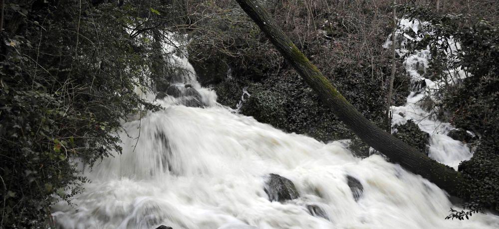 La Coma, Solsonès. Per la pluja d'aquests dies, el riu cardener baixa a tot drap.