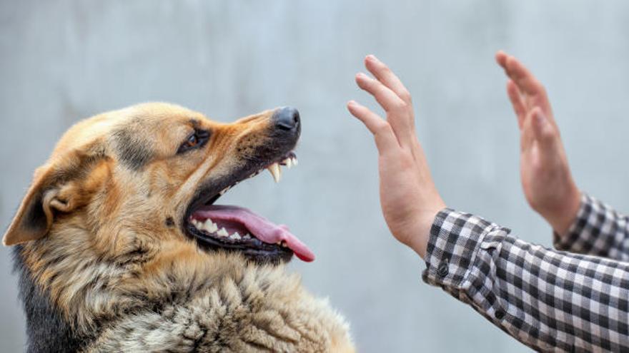¿Qué hacer si nos ataca un perro?