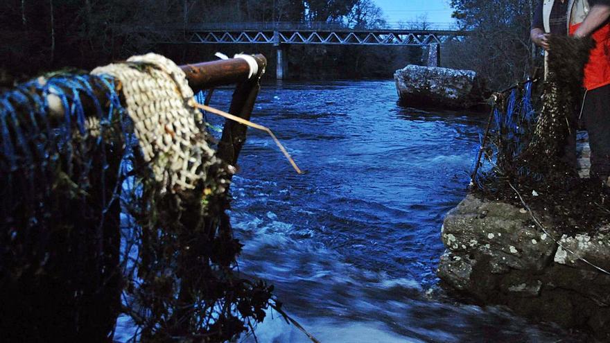 Los titulares de las pesqueiras temen que les impidan capturar lamprea