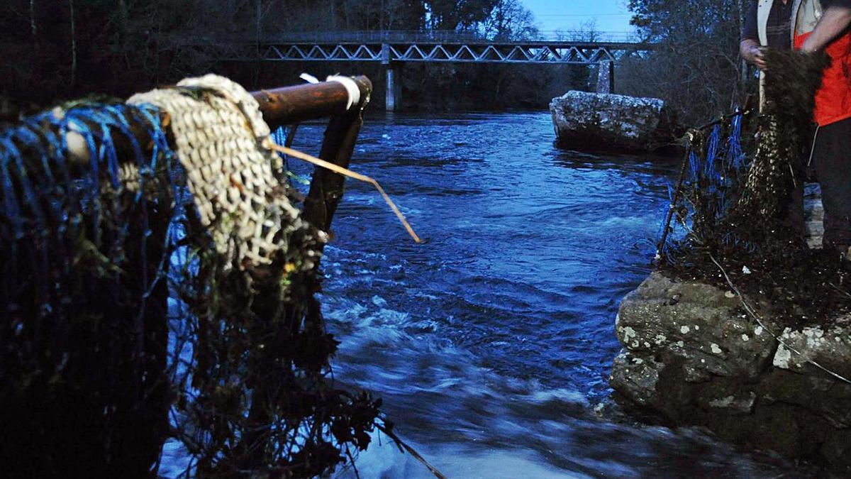 La colocación de las redes en las pesqueiras de Herbón, en la campaña de hace un par de años. |   // ABELLA