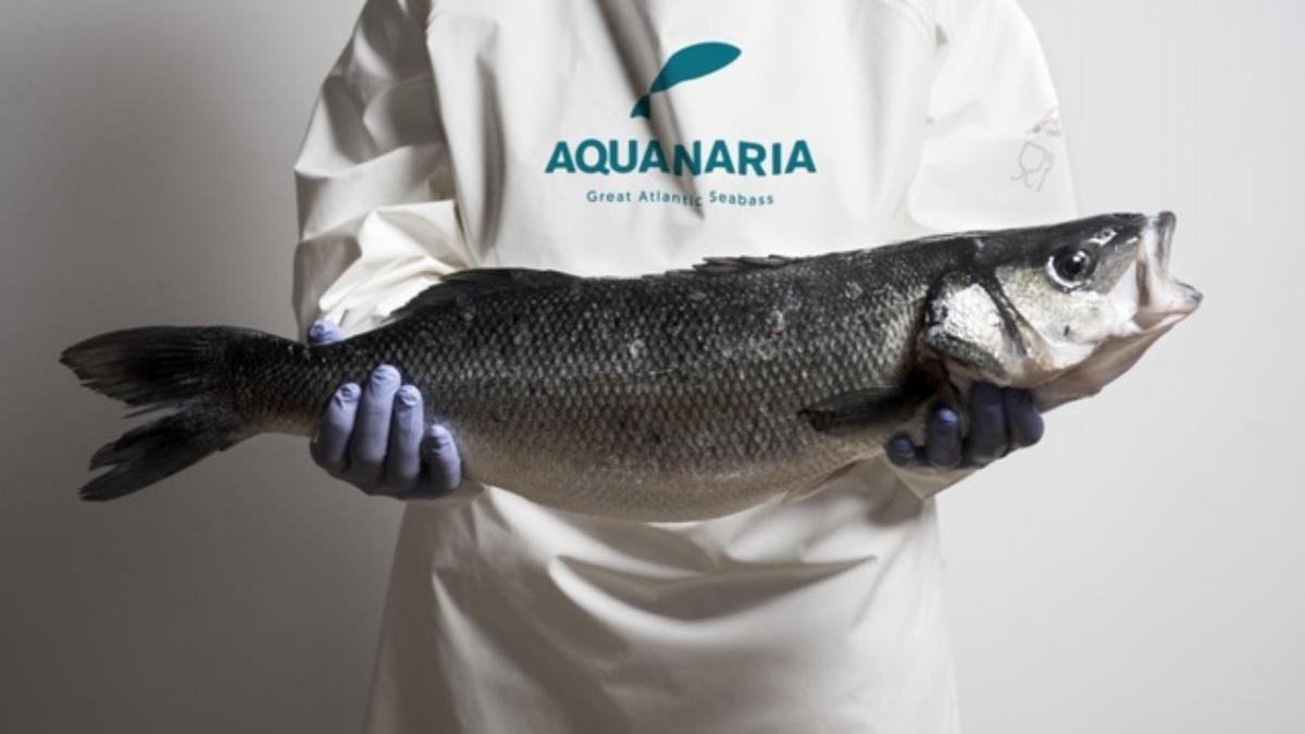 Más de 400 restaurantes participan en las primeras Jornadas Gastronómicas nacionales de la Lubina Aquanaria