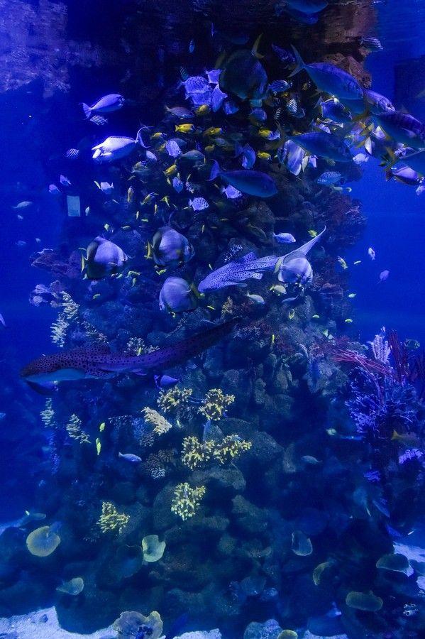 Reapertura del acuario Poema del Mar