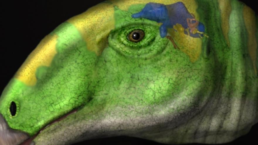 Los dinosaurios ornitópodos pudieron haber sido tan listos como sus parientes carnívoros