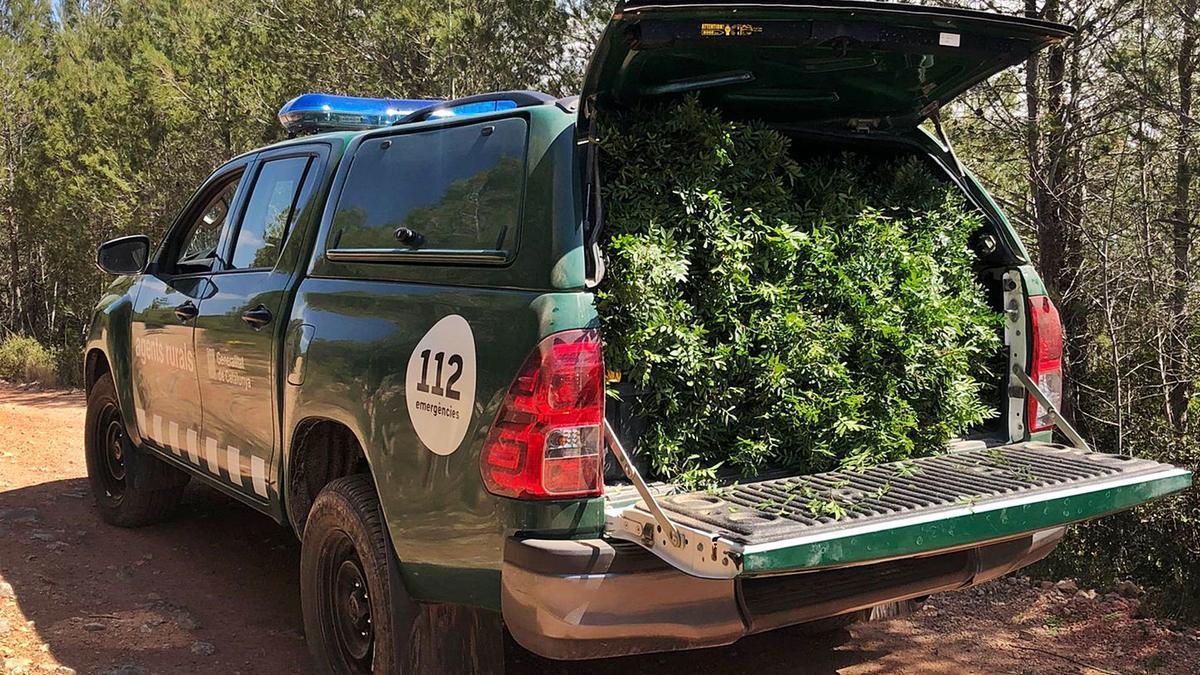 Un vehicle dels Agents Rurals carregat de llentiscle.  AGENTS RURALS   AGENTS RURALS