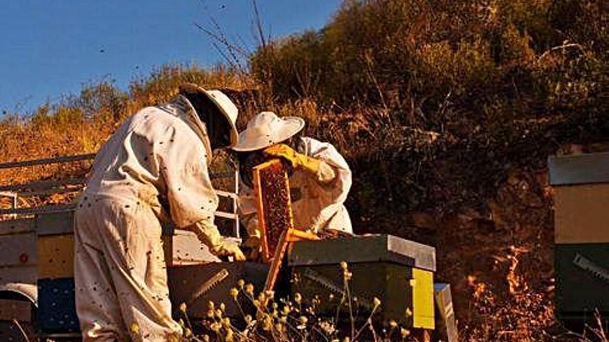 Explotación apícola en el municipio de Figueruela de Arriba.