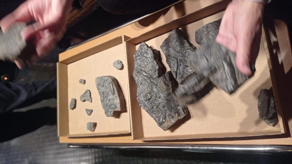 Detalle de los fósiles.