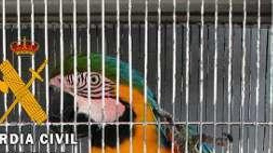 Dos investigados en Zamora por tener aves protegidas en su casa