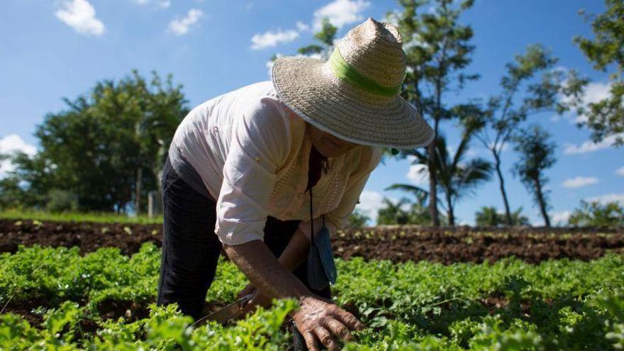 Varias ciudades españolas apuestan por la agroecología ante el cambio climático y el covid