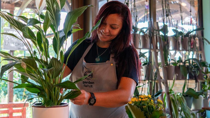 Tria plantes que decorin, aportin beneficis i siguin fàcils de cuidar