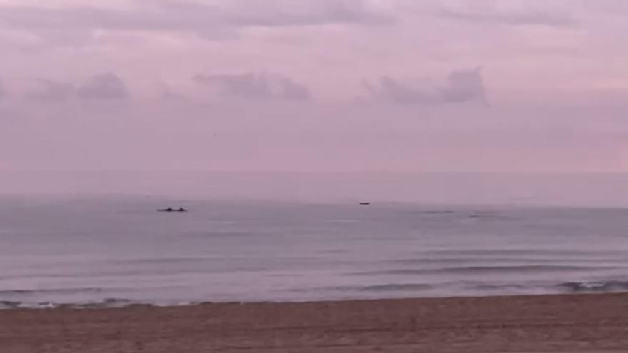 Una manada de delfines recorre la playa de San Juan en la mañana de Navidad