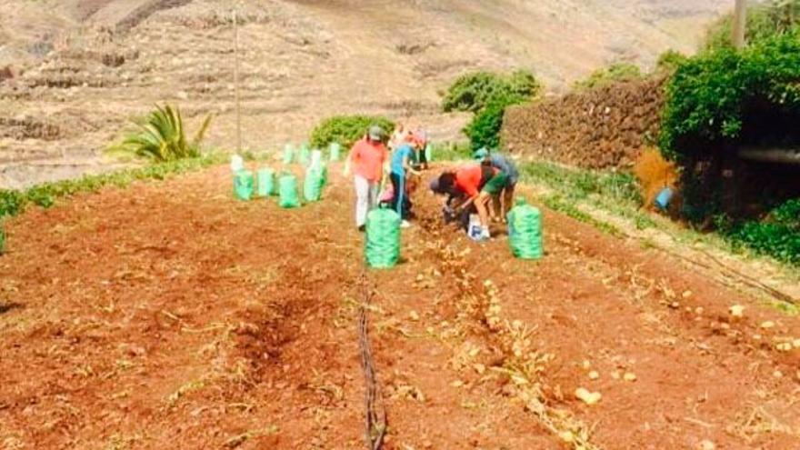 Finaliza el plazo para solicitar el uso de los huertos sociales del Cabildo de La Gomera