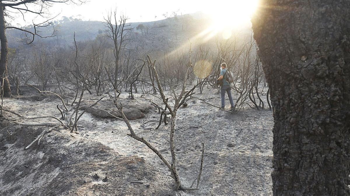 Casi 10.000 hectáreas de flora y fauna han sido devoradas por las llamas. | ÁLEX ZEA