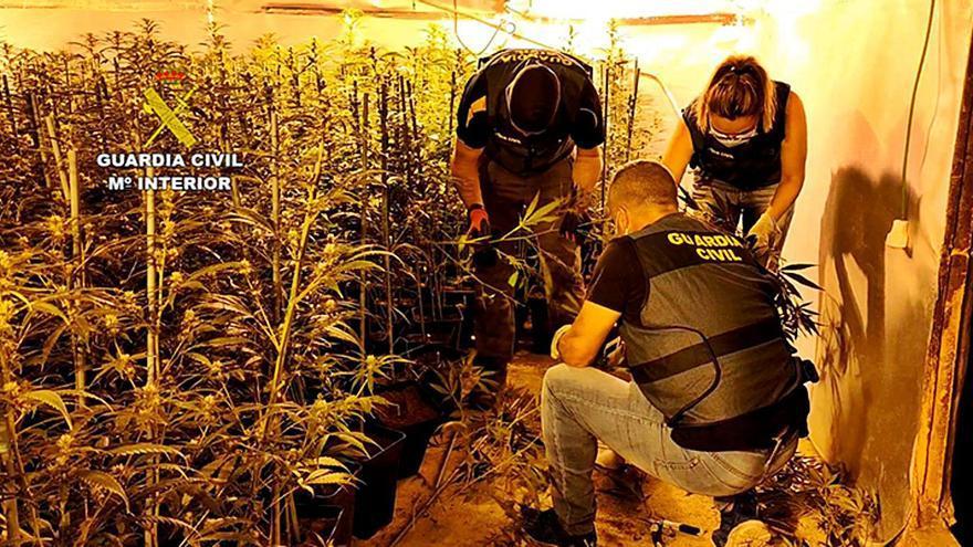 Más datos sobre las plantaciones de droga en Villanueva y Cerecinos: obtenían luz de enganches ilegales