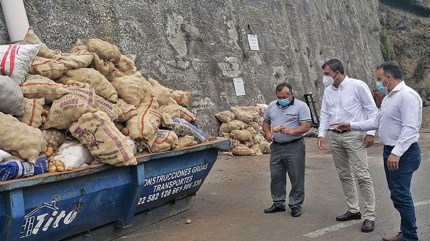 Cabildo y Ayuntamiento de Los Realejos retiran 218.000 kilos de papas afectadas por la polilla