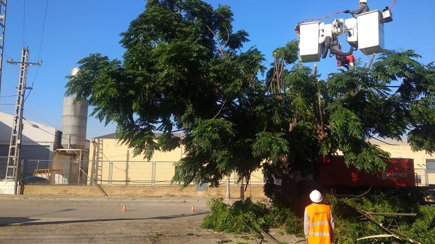 Poda de arbolado junto a las líneas eléctricas en Fuente del Jarro