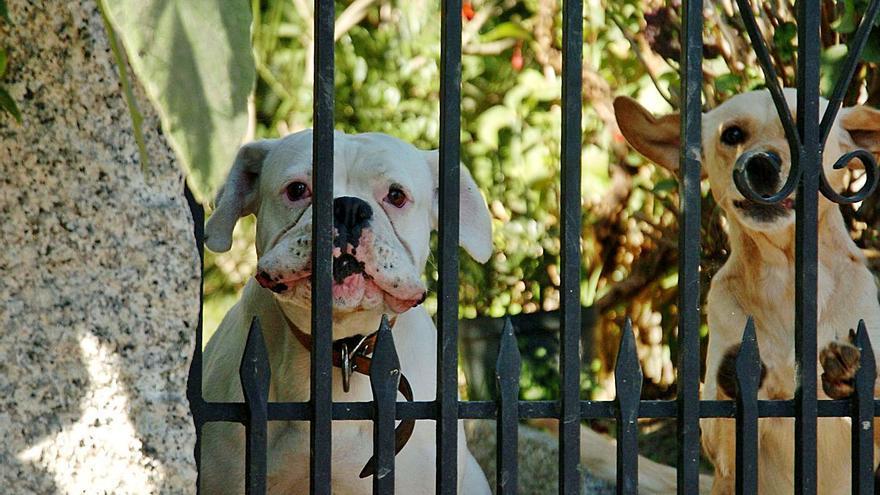 El miedo a las multas eleva los perros peligrosos censados al borde de los 20.000