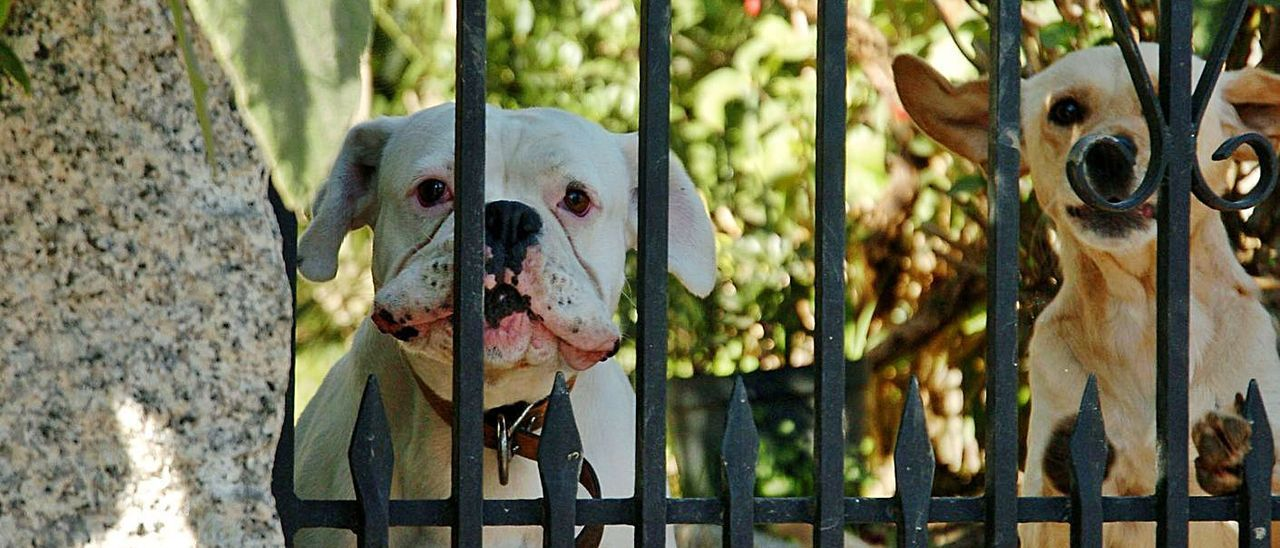 Dos perros en el interior de una propiedad en Pontevedra.