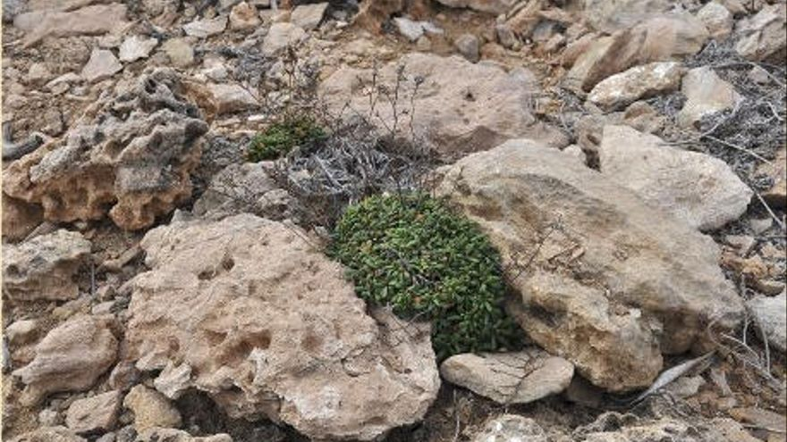 Bitte keine Steinmännchen auf Mallorca bauen!
