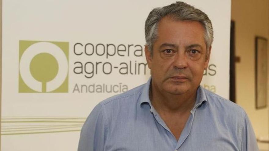 La DO Baena y el Comité Olímpico impulsan las 'Jornadas de Aceites de Oliva Vírgenes Deporte y Salud'