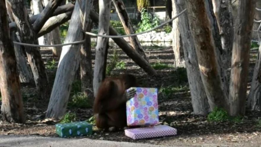 Los animales de Río Safari Elche reciben sus regalos de Navidad