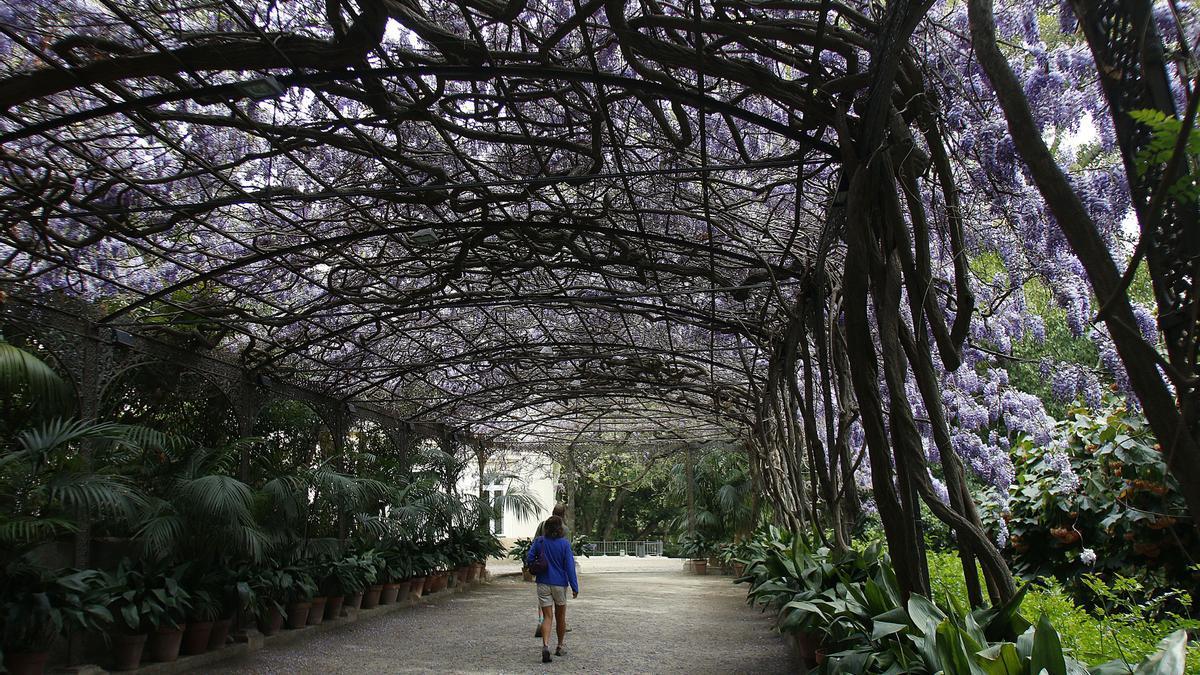 Imagen del Jardín Botánico-Histórico de La Concepción.