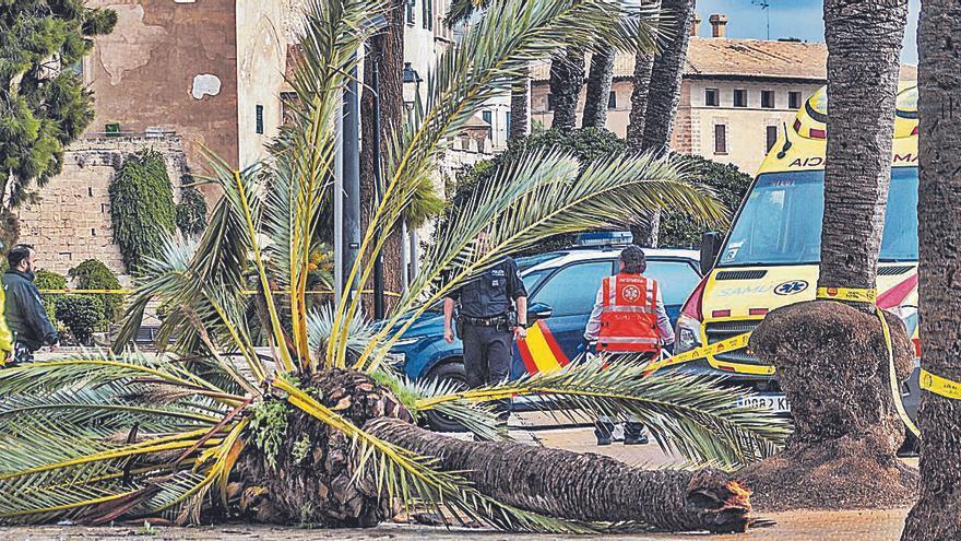 La familia de la muerta por una palmera reclama 331.000 euros