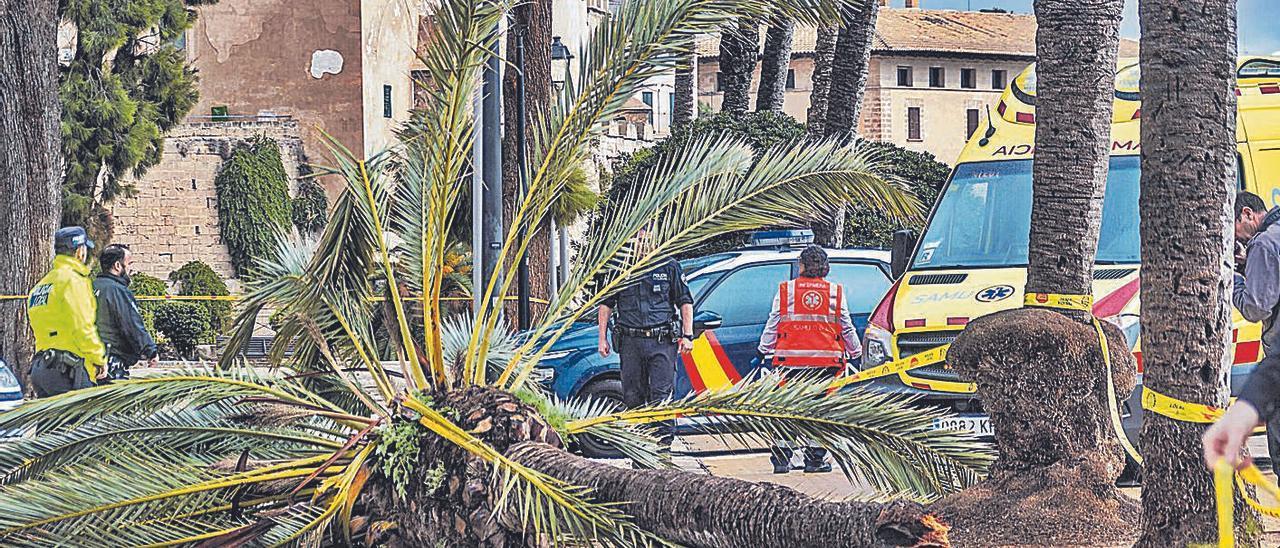 Policías y efectivos sanitarios, junto a la palmera que aplastó a la víctima en Dalt Murada.