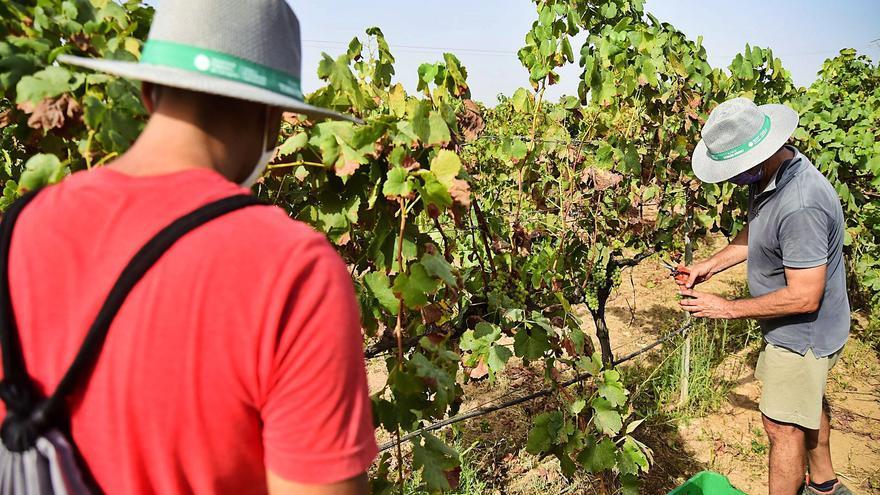 Una clase entre viñedos