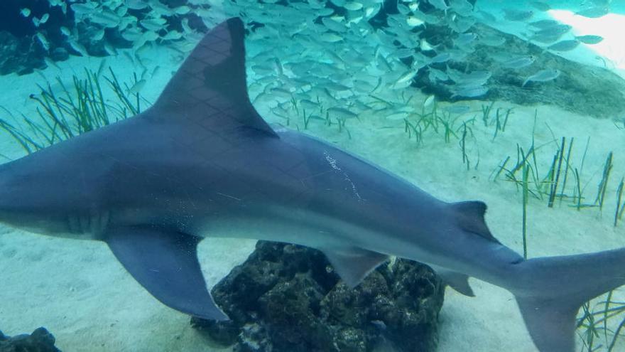 Muere una mujer en Nueva Zelanda por el ataque de un tiburón