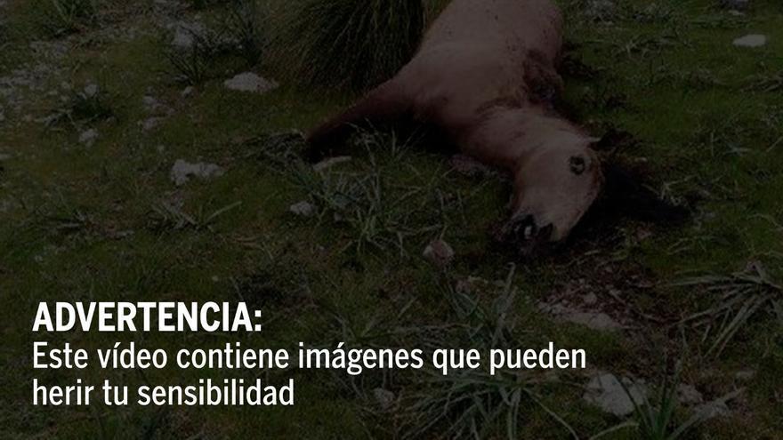 El investigado por matar a una yegua a hachazos en Mallorca acumula diez antecedentes