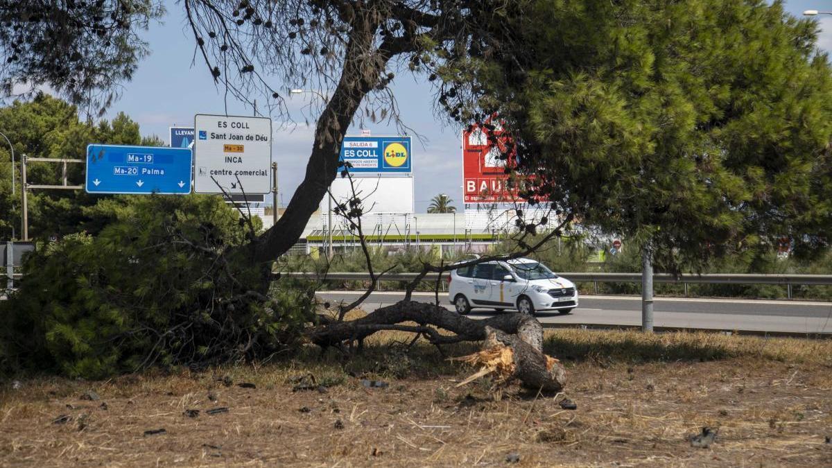 Un guardia civil retirado muere en accidente en la autopista de s'Arenal